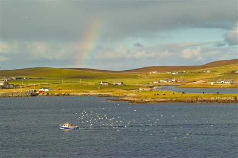 Shetlands: Rural Scene