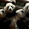 panda-colors