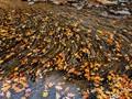 Leaf Migration