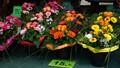 Colourful arrangements