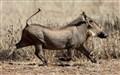 Warthog Stroll