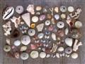 Allison's Shells
