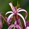 floral_12