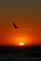 Sunset with bird