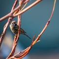 Small Bird on Perch