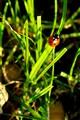 A Little Ladybird