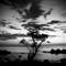 Jamaican_Tree