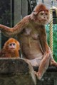 Taken at the Wilhelma Zoo in Stuttgart, Germany