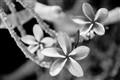 Infrared-Flower