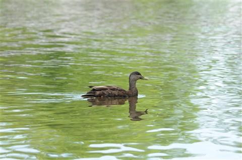 Oiseaux au parc des Iles de la Visitation Mai 2010 51