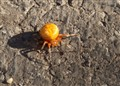 why did the spider cross the road - 04272