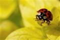 beetle on start