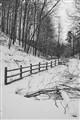 trees, fence, stream