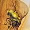 2017 Amber 010 March Diptera Brachycera II