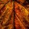 Fall-Leaf_001-Web