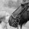 Joyce & her Frysian horse