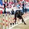 Incredible_Dog_20110402_125