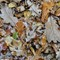Wintry wet leaf litter