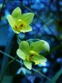bluish yellow