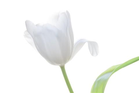 whiteflowers-2814