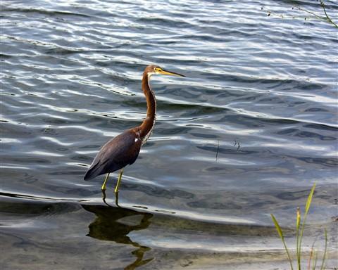 Bird1280_IMG_3151