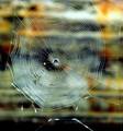 Concentric Web