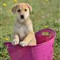 CaninePetRescue_104756_20120516