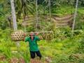 The Farmer in Bali