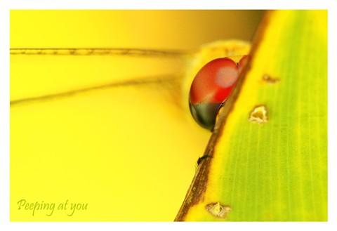 IMG_5786-Yellow