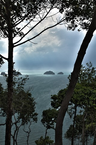 samui-island-view-through-trees[1]