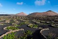 Winegrowing in Lanzarote, Canary Islands