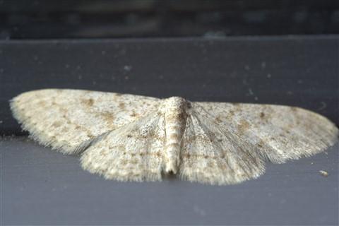 A moth on the window