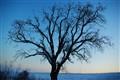 The Last Tree 2