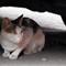 The Cautious Cat 2  (Second Version)