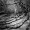 Mirk Wood