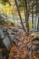 Roots in Killbear Provincial Park, Ontario
