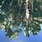 Rio Botanical Gardens, reflections