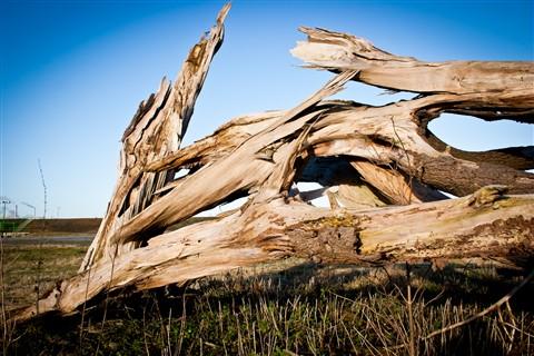 Challenge Dry Tree