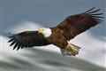 alaska_eagle_0807