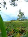 Bujang Valley - a different view