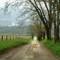 cades cove spring rain