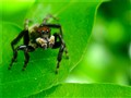 Fierce Spider? No!