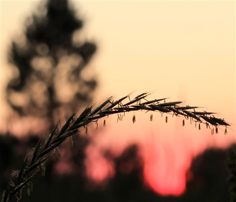 Sunset Poser