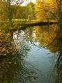 Golden Autumn Afternoon