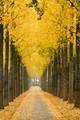 Golden Avenue