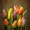 Rainbow tulips 3