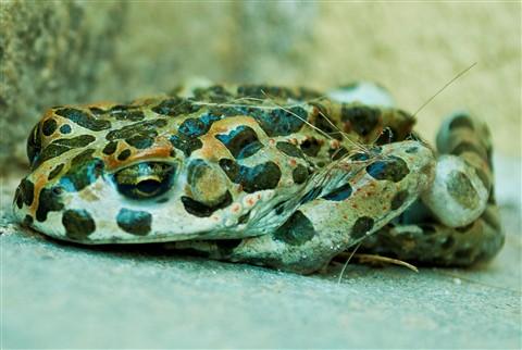 frogg