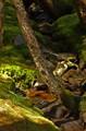 Moss around dried-up stream