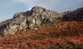 Rhodes landscape