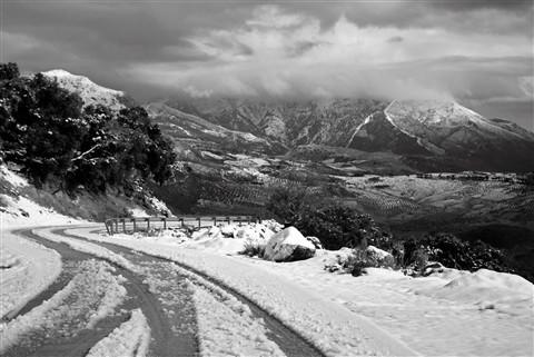 Malaga Snow.